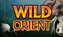 Wild Orient - No Deposit Slots